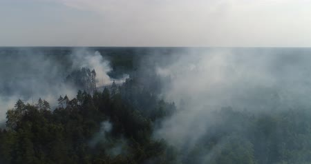 hot news : Forest in Fire, Burning Trees, Bushs, Burning Dry Grass in the Peatbog. Heavy Smoke Against Sky. Dron Shoot.
