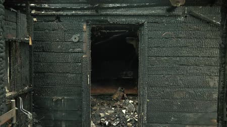 charred : Burned House Interior After Fire, Ruined Building Room Inside, Disaster or War Aftermath Concept. Black Coal Texture of the Scorched Wooden Boards and Window of the House Walls. Stock Footage