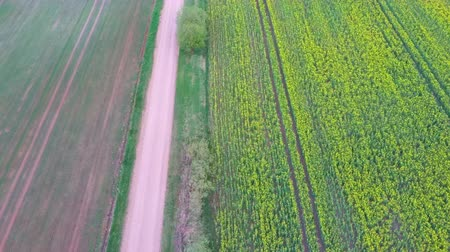 repce : Flight Over Field With Flowering Canola Flowers and Country Road. Aerial Dron Footage. Flowering Rapeseed Canola or Colza in Latin Brassica Napus, Plant for Green Energy and Oil Industry, Rape Seed.