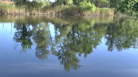 underwater landscape : Reflection of branches of trees on a surface of water and natural voices of singing birds.