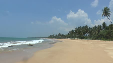 Тропический климат : Tropical coastline ,Sri Lanka. Стоковые видеозаписи