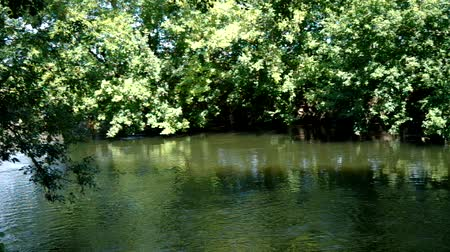 underwater landscape : Landscape with river and forest Stock Footage