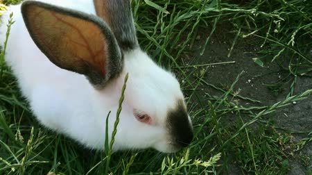 hare : Beautiful young small rabbit on the green grass in summer day. White cute rabbit on grass background. Close-up.