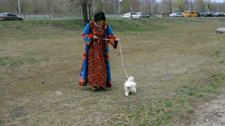 peking : Pet dog walks over white.
