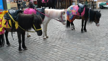 poney : Odessa, Ukraine, May 2019: - Decorated ponies stand on Deribasovskaya street in the city of Odessa. These ponies are used around the city.