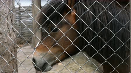 klatka : Portrait of a brown horse behind a fence on farm. Outdoors Close-up. Wideo