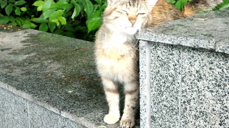 undomesticated cat : Motley cat sits on a concrete surface.