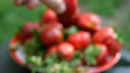 püskürtücü : Blurred summer background. Defocused shot. Large red ripe strawberries are pouring rain or from a sprayer. Big berries, summer harvest, vegetarian healthy natural food concept.