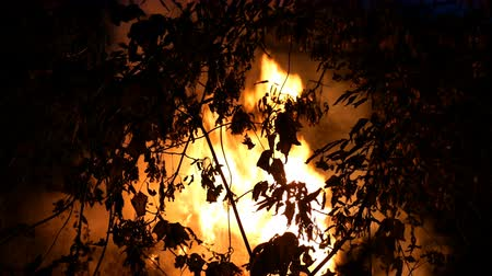 Area of bushfire, burning at night time with lot of smoke rising into the air. Trees silhouettes. Flames light up the environment. Outdoors. Close-up. Stock mozgókép