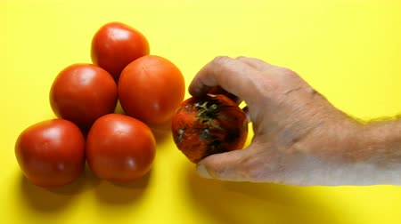 döntés : Ripe tomatoes and one rotten tomato on yellow background. Human hand changes rotten tomato for good one. Concept of change from old to new or spoiled to good, development and improvement.