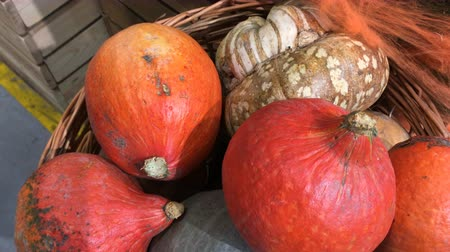 tykev : Many ripe orange and green pumpkins lie in heap on market counter or in field. Autumn or Halloween decor. Harvest or healthy eating concept.