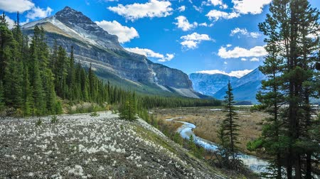 kanada : Beauty Creek, Icefields Parkway, Alberta, Canada
