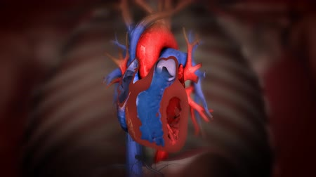 choroba : heart with blood action close up animation
