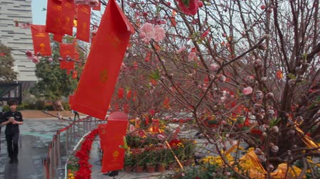 to celebrate : Chines Red Envelope on the tree