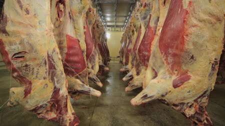 etli : Carcasses of cows in row in meat factory