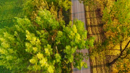 Gray car with roof carrier box driving autumn rural countryside road at sunset across trees. Top aerial view