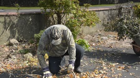 мышечный : senior male tidying leaves in his garden and driveway