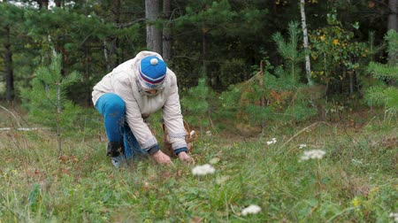 mycelium : Elderly woman picks mushrooms in the autumn forest. Grandmother squatting, cuts the mushroom and puts in the basket. Old woman gather mushrooms. Green grass and wood around. Spending time outdoors. Stock Footage