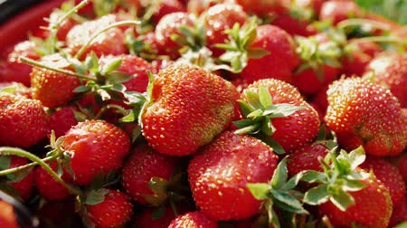 калорий : Delicious red ripe garden strawberry. Natural rural product from garden. Smooth motion, close up.