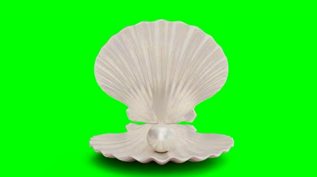 muszla : Opens and closes pearl inside sea shell isolated on a green background. Jewelry pearl beads. Brilliant oyster pearl ball for luxury accessories. Brilliant sea pearl. Looping 3D 4K animation