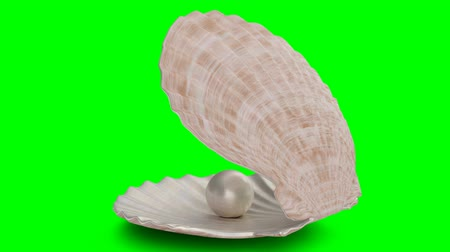 Rotated pearl inside sea shell isolated on a green background. Jewelry pearl beads. Brilliant oyster pearl ball for luxury accessories. Brilliant sea pearl. Looping 3D 4K animation