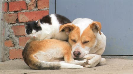 kitty : Dog and cat. Friendship forever.