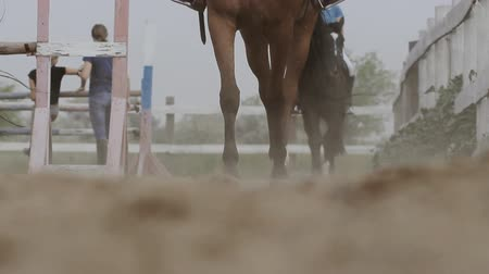 horse racing : running horse on the sand Stock Footage