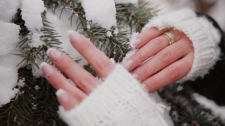 touched : girl touches the snow on the branches of spruce Stock Footage