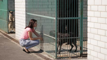 cur : Girl volunteer in the nursery for dogs. Shelter for stray dogs. Stock Footage