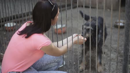 cimborák : Girl volunteer in the nursery for dogs. Shelter for stray dogs. Stock mozgókép