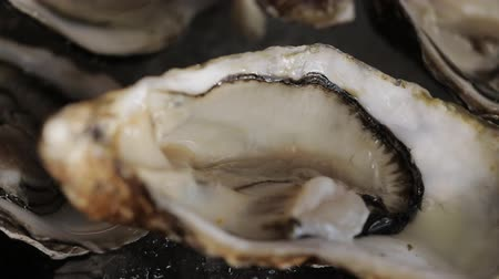 seafood dishes : Oysters placed on ice tray