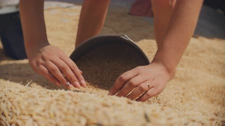 sifting : Women collecting buckets of barley grain. The work on the farm. The collection and weeding of the crop.