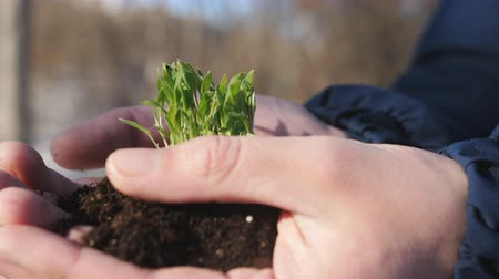 nurture : Man Hands Holding a Little Green Sprout. A man holds a sprouting sprout with black earth in his hands. Closeup