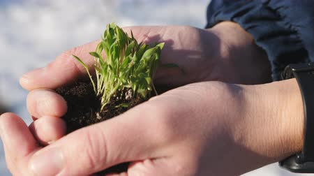 хрупкий : Handful of Soil with Young Plant Growing. Concept and symbol of growth, care, sustainability, protecting the earth, ecology and green environment. male hands top view.