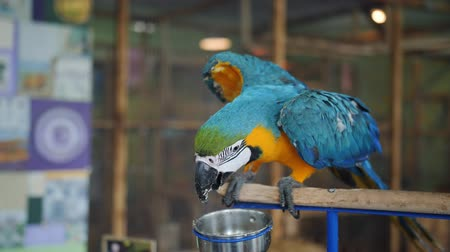ara : Macaw parrot petting zoo sitting on a stump petting zoo.