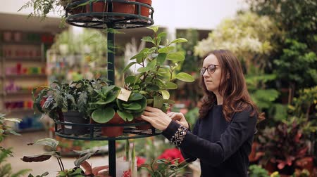 köşeler : The buyer at the flower shop considers houseplants in pots. A woman wants to buy a flower in a pot. Stok Video