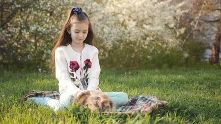 rozmazaný : Girl 6-7-year-old petting a small rabbit sitting on the green lawn in the garden. Dostupné videozáznamy