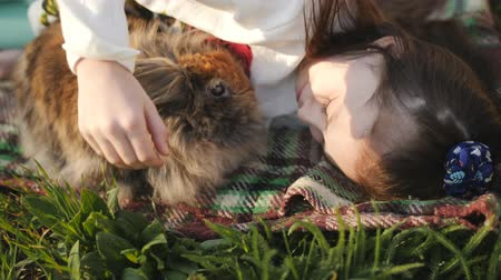 chmýří : Little girl and brown rabbit lying on the green lawn and a hug. Girl playing with a favorite pet. Linography rabbit.