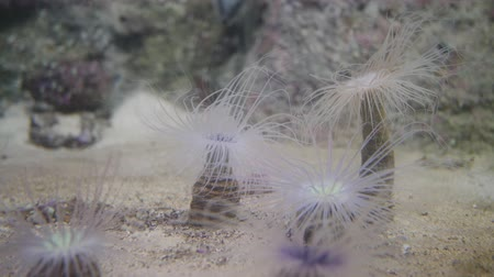 anemon : Underwater plants on the bottom look like palm trees. Stok Video