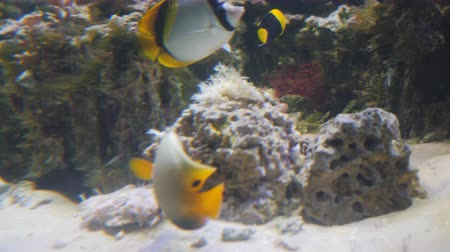 さまざまな : A variety of fish swim in their environment. Lots of variety of fish behind glass in an aquarium. 動画素材