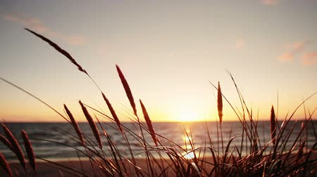 evening sun : Beautiful sunset on the Baltic Sea. Klaipeda. Lithuania. The wind stirs the grass on the shore of the sea. Stock Footage