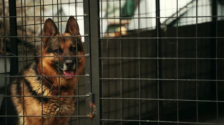 almanca : German shepherd dog is sitting in a cage