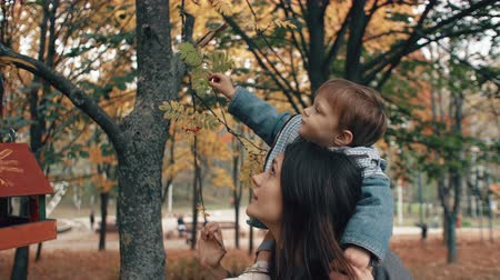 plucks : beautiful young mother holds on the shoulders a cute little son, boy plucks red berries from a tree in autumn park 4k