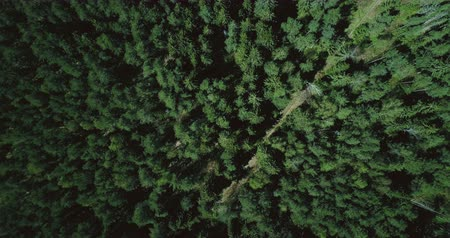 pristine : Drone ascending and rotating over forest road. Aerial 4K vertical zoom out background shot of quiet evergreen pattern.