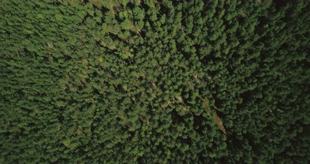 procura : Drone flying slowly above smooth forest texture. Aerial 4K straight vertical shot of quiet wilderness and lost road.