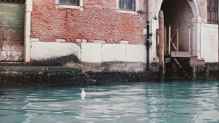 Camera zooms in on beautiful atmospheric red building on Venice canal, Italy with beautiful blue water and seagull on it Stock Footage
