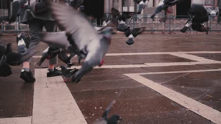 Beautiful woman tourist with camera walks near San Marco basilica and flock of pigeons in Venice Italy slow motion. Stock Footage