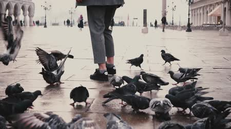 eski moda : Big flock of pigeons around happy female tourist with camera on old San Marco city square in Venice, Italy slow motion.