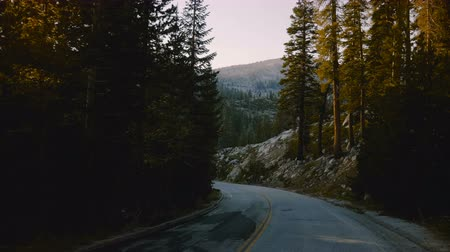 verhuizen : Camera on a vehicle is moving along beautiful forest mountain road turn between trees on sunset in Yosemite slow motion. Stockvideo