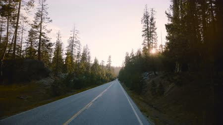 çam ağacı : Car with camera is moving along beautiful peaceful forest road between pine trees on sunset in Yosemite slow motion.